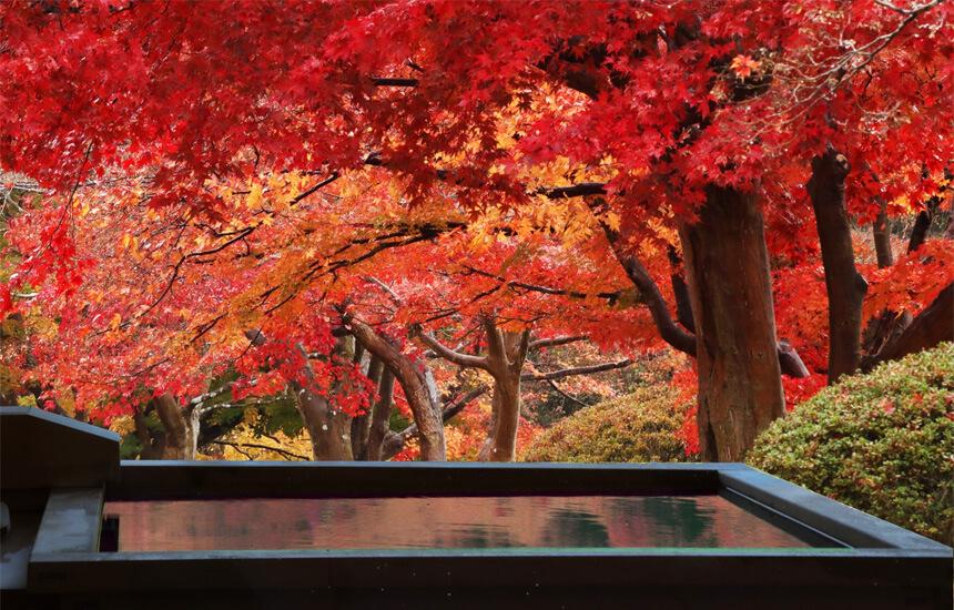 断食道場の選び方|大阪付近など関西でおすすめの断食道場は?安い・無料の断食道場は?